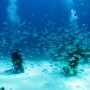 Diving - Fishes