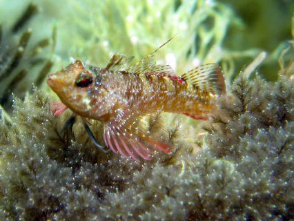Hondoq Bay Creatures