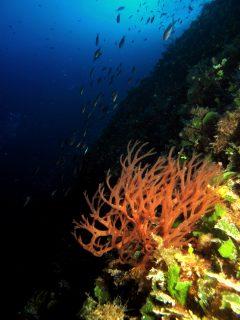 Reef Diving Flora