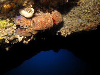 Billinghurst Cave Creatures