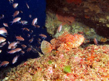 Blue Hole Chimney Reef Fish