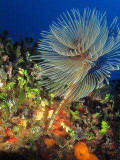 Dawra tas-sanap creatures flora