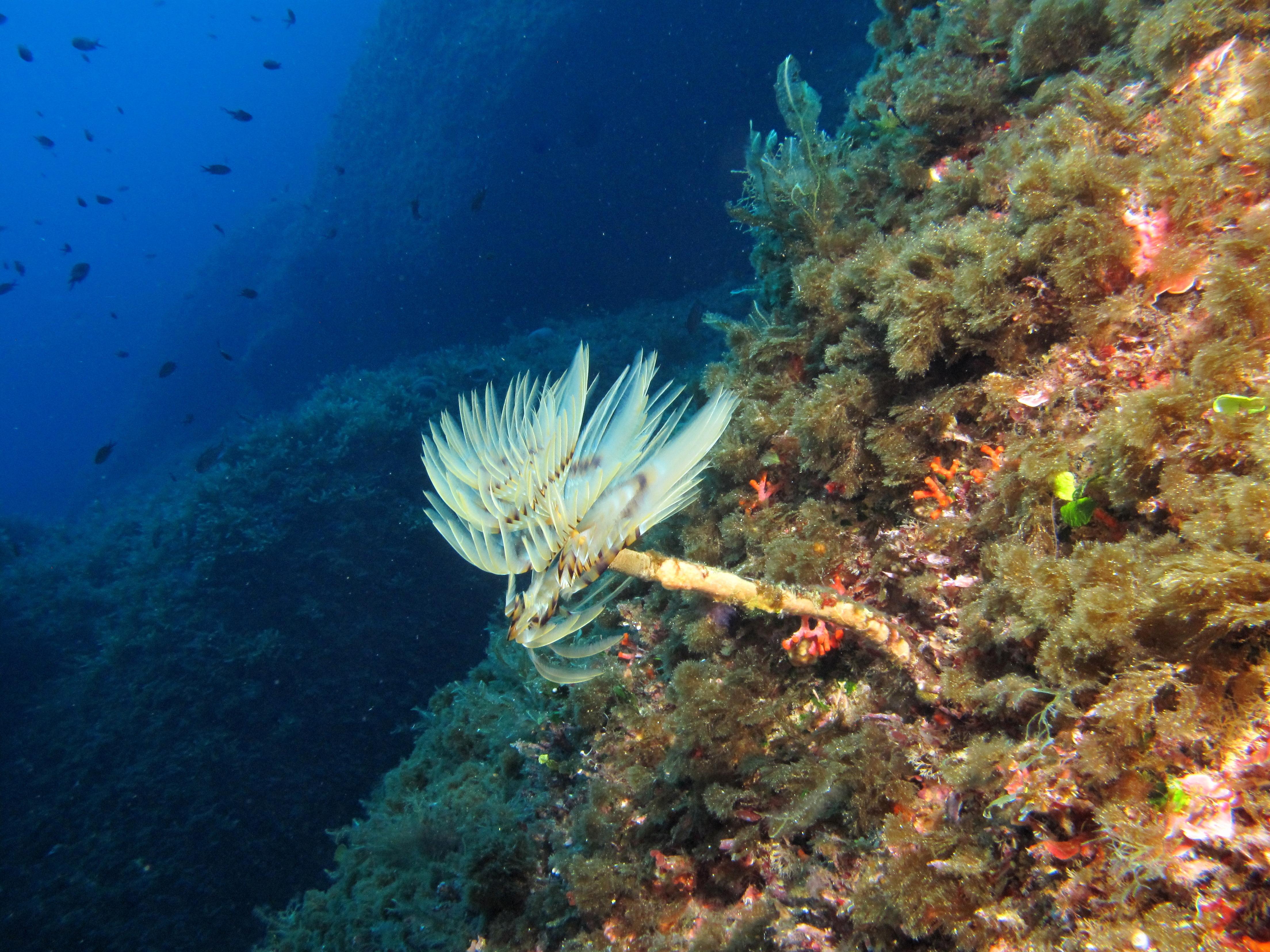 Fungus rock atlantis gozo for Gozo dive centres
