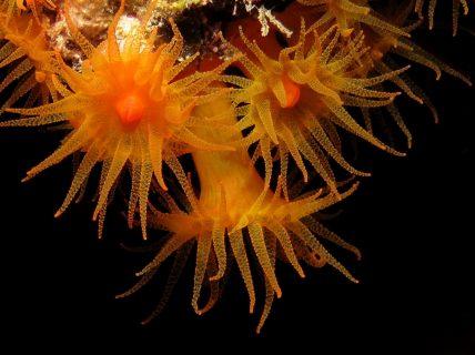 Ghar Jahra Flora Creatures