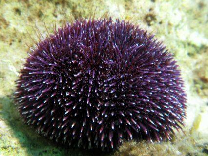 Underwater flora