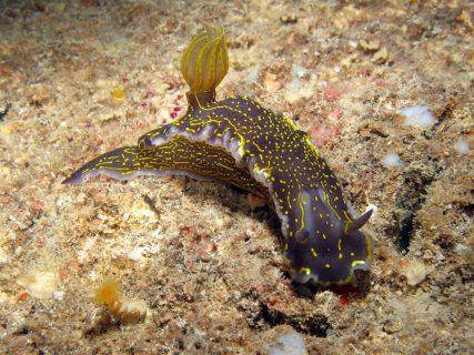 Inland Sea Diving Creatures