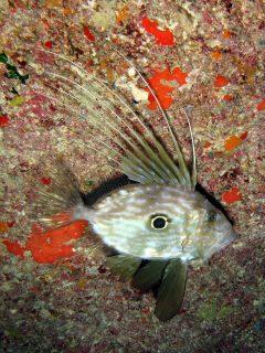 Inland Sea Fish