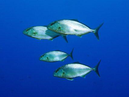 Ras il-Hobz Fish