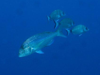 San Dimitri Point Diving