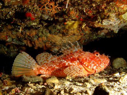 San Dimitri Point Fish