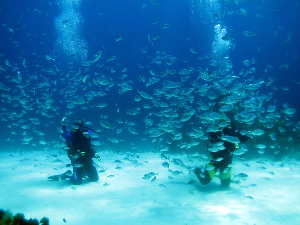 Scuba diving in malta gozo atlantis gozo for Gozo dive centres