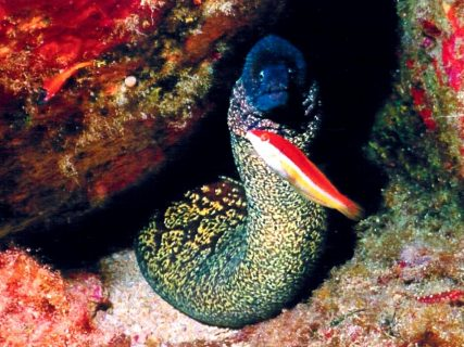Ta Tejtu Fish