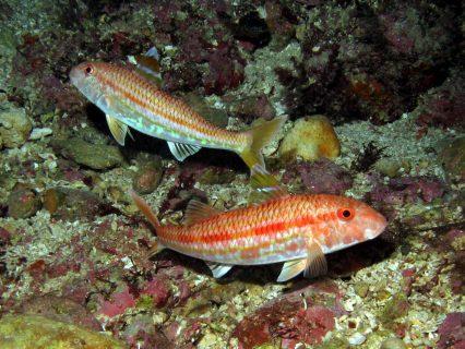 Ta Tejtu Fish Flora