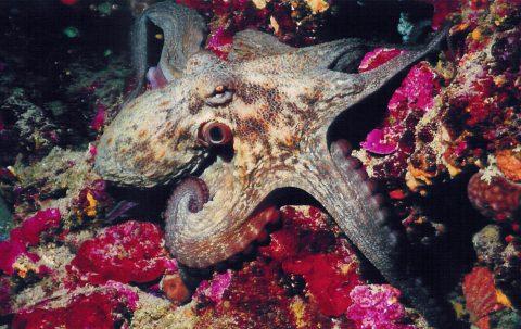 Ta Pawla Diving Creatures