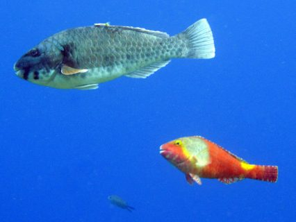 Wied il-Mielah Fish