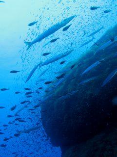 Wied il-Mielah underwater