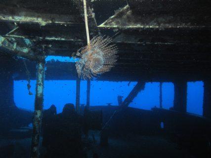 Cominoland MV Shipwreck flora