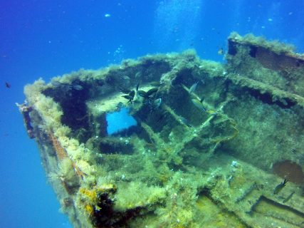 Wreck Um El Faroud Sealife