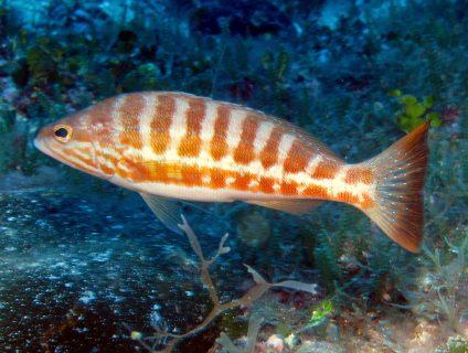 Xatt L-Aħmar diving Gozo