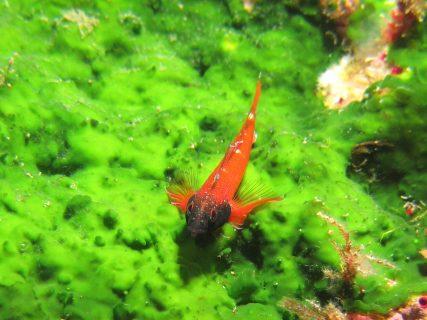 Xlendi Cave Reef Fish