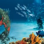 Atlantis diving voucher
