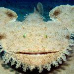 Anglerfish 9