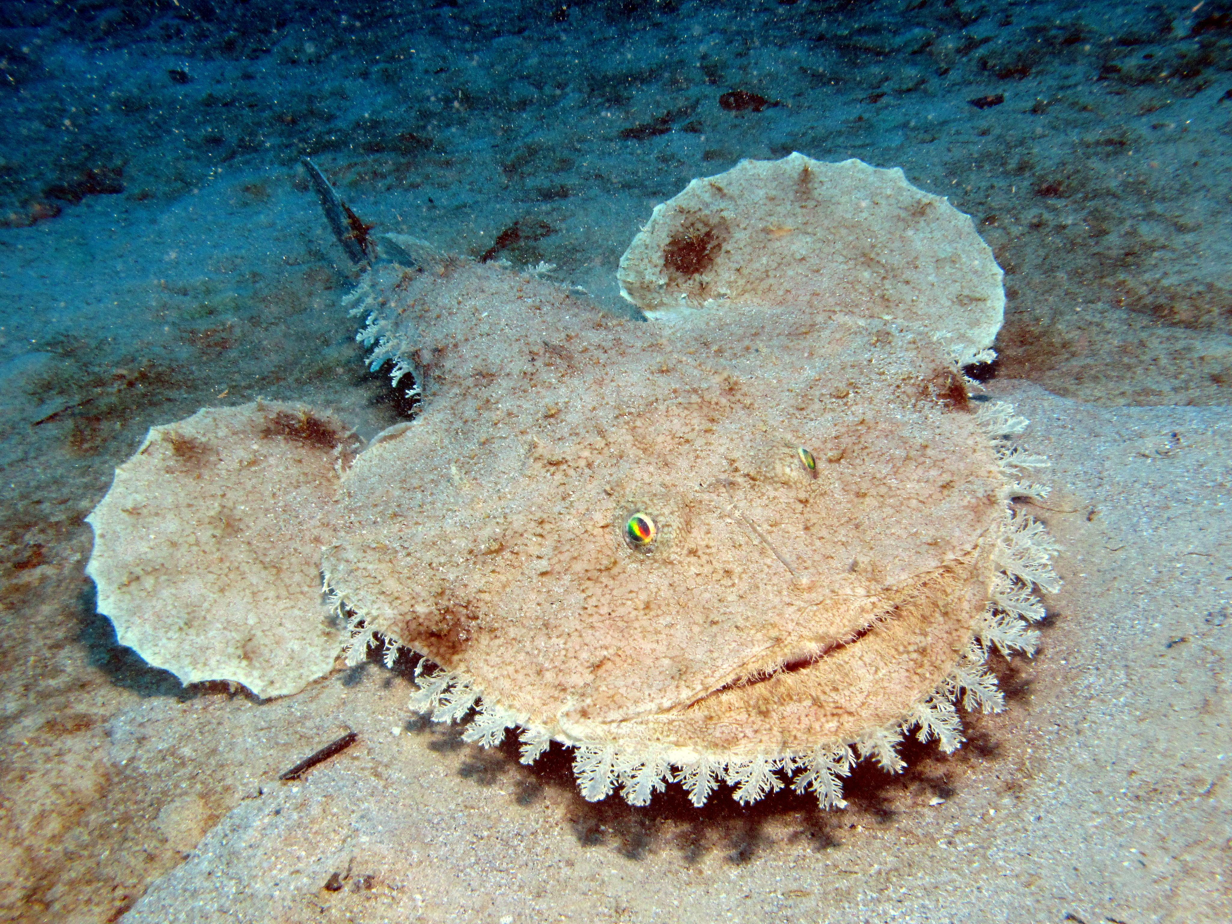 Anglerfish 10